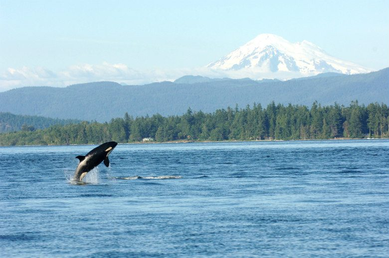 locations for whale watching Spring whale watching week is fast approaching, march 22 to march 29, but how do you know where to go to see the migrating whales using the oregon state parks data on whales and visitors.