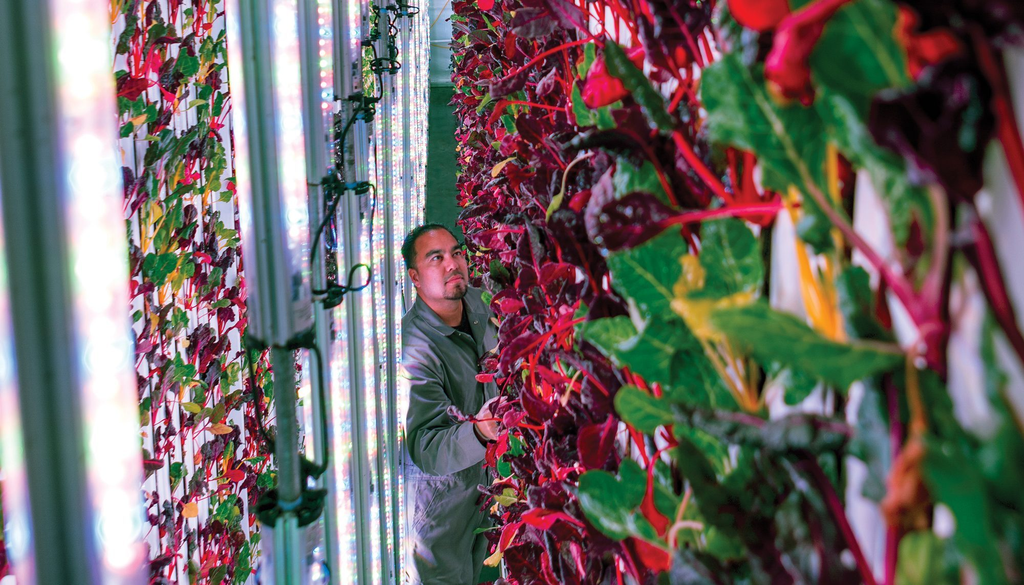 One of the worlds biggest indoor farms is now growing food in kent one of the worlds biggest indoor farms is now growing food in kent workwithnaturefo