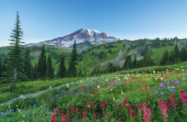 The wildflowers around Mount Rainier are at their peak in July and August